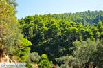 Palio Klima (Oud Klima)   Skopelos Sporaden   De Griekse Gids foto 3 - Foto van De Griekse Gids