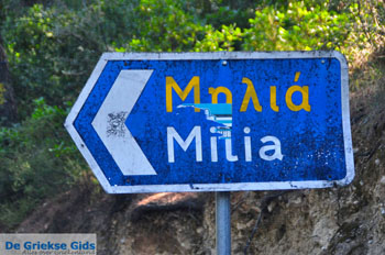 Milia | Skopelos Sporaden | De Griekse Gids foto 4 - Foto van De Griekse Gids